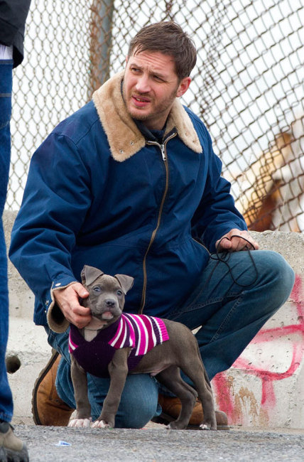 Tom Hardy and His Puppy in a Sweater
