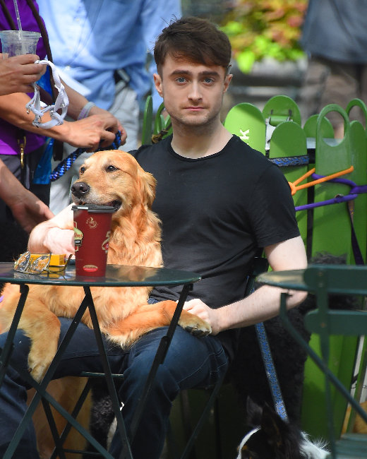 Daniel Radcliffe Walking Dogs In What Movie
