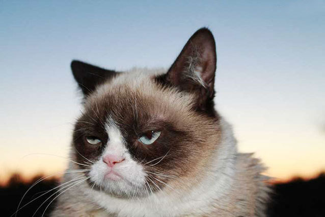Grumpy Cat for Friskies