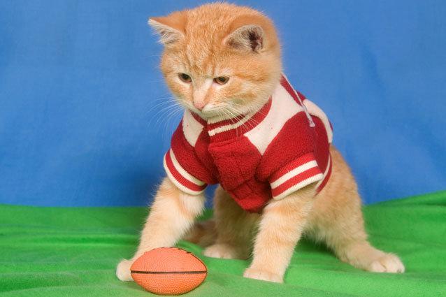 Hallmark Channel's Kitten Bowl