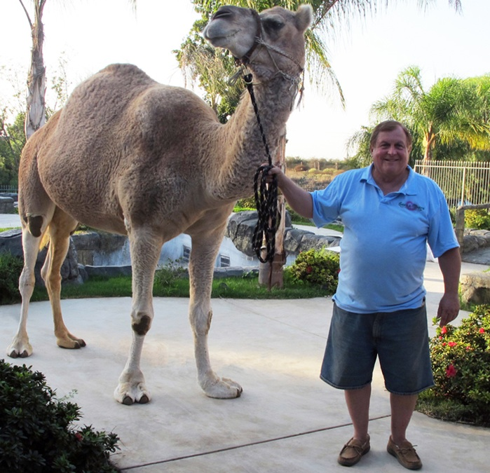 burt ward camel