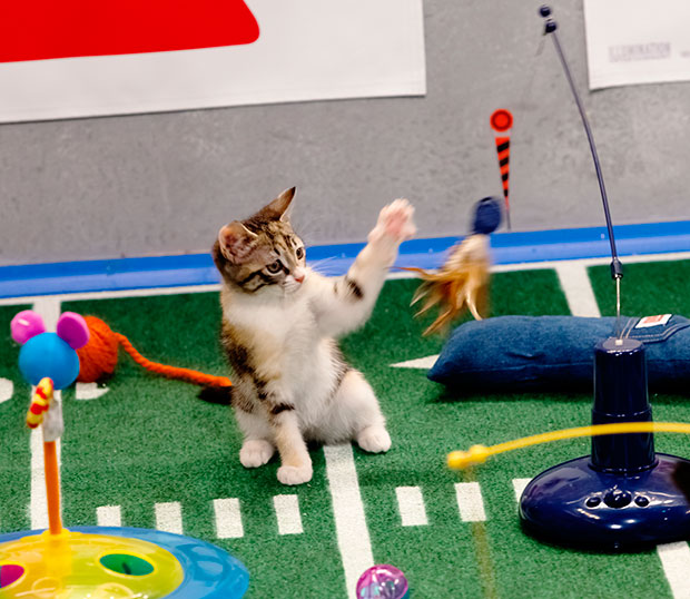 Puppy Bowl Kitten Halftime Show
